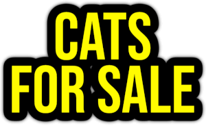 cats for sale PNG