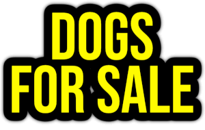 dogs for sale PNG