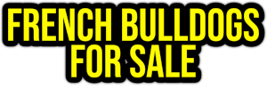 french bulldogs for sale PNG