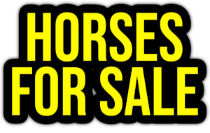 horses for sale PNG