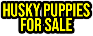 husky puppies for sale PNG