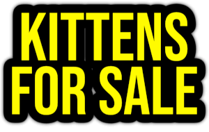 kittens for sale PNG