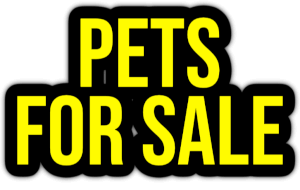 pets for sale PNG