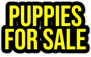 puppies for sale PNG